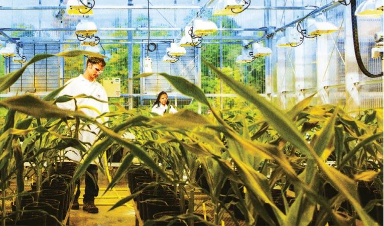 Sürdürülebilir tarım için dayanıklı hasat