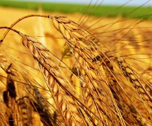 Tohumculuk ve organik tarıma büyük ilgi var