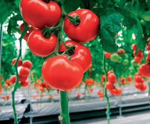 Yaş sebze ve meyve ihracatı 10 milyar dolara ulaşacak
