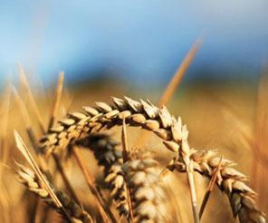 Tarım kredilerinde liderliğimizi sürdüreceğiz