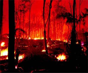 Orman yangınları...bilinçlendirmenin önemi