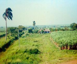 Plantasyon ormanları